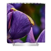 Dreaming Of Wings Shower Curtain
