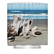 Driftwood On Beach Shower Curtain