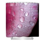Droplets On Pink Shower Curtain