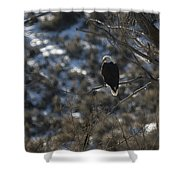 Eagle In Tree Shower Curtain