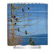 Eagle Tree By The Salish Sea Shower Curtain