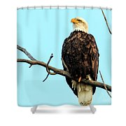 Eagle's View Shower Curtain