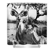 East Africa: Kudu Shower Curtain