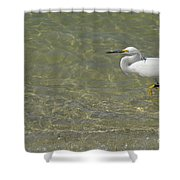 Eastern Great Egret In Florida Shower Curtain