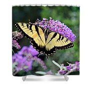 Eastern Tiger Swallowtail Butterfly 2015 Shower Curtain