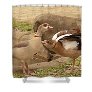 Egyptian Geese Shower Curtain