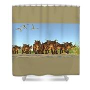 Einiosaurus Dinosaurs Shower Curtain