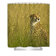 Elegant Cheetah Shower Curtain