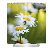 Elegant White Daisies Shower Curtain