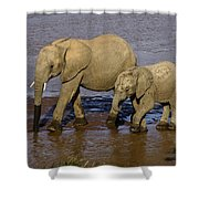 Elephant Crossing Shower Curtain