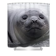 Elephant Seal Pup Shower Curtain