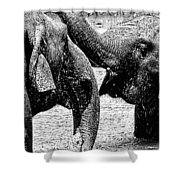 Elephants At Play Shower Curtain