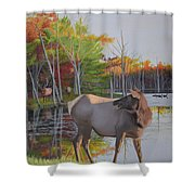 Elk Country Evening Shower Curtain