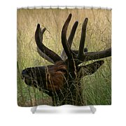 Resting Elk Shower Curtain