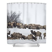 Elk Herd In The Snow Shower Curtain