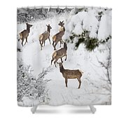 Elk In Deep Snow In The Pike National Forest Shower Curtain