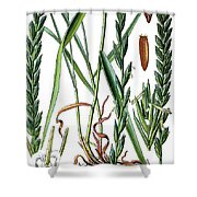 Elymus Repens, Commonly Known As Couch Grass Shower Curtain