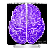 Enhanced 3d Surface Rendering Of Brain Shower Curtain