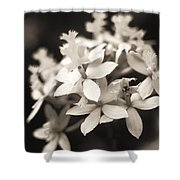 Epidendrum Orchid Shower Curtain