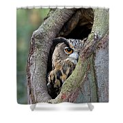 Eurasian Eagle-owl Bubo Bubo Looking Shower Curtain by Rob Reijnen