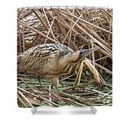 European Bittern Shower Curtain