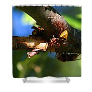 European Hornets Shower Curtain