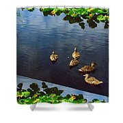 Exotic Birds Of America Ducks In A Pond Shower Curtain