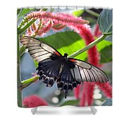 Exotic Butterflies At Rhs Wisley Surrey Uk Shower Curtain