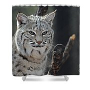 Face Of A Canadian Lynx Shower Curtain
