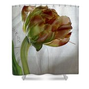 Faded Love Letters6 Shower Curtain