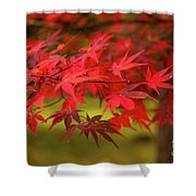 Fall Color Maple Leaves At The Forest In Aomori, Japan Shower Curtain