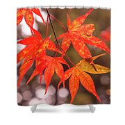 Fall Color Maple Leaves At The Forest In Kochi, Japan Shower Curtain