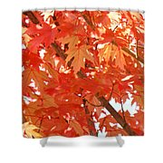 Fall Trees Colorful Autumn Leaves Art Baslee Troutman Shower Curtain