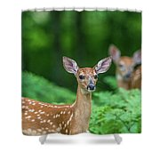Fawns Shower Curtain