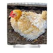 Feathered Finery Shower Curtain