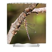 Female Migrant Hawker Shower Curtain