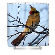 Female Northern Cardinal Shower Curtain