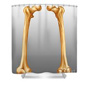 Femur, Anterior And Posterior View Shower Curtain