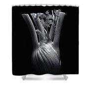 Fennel Shower Curtain