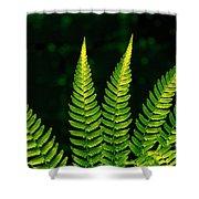 Fern Close-up Nature Patterns Shower Curtain