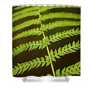 Fern Pattern Shower Curtain