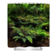 Ferns Of The Forest Shower Curtain