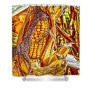 Field Corn Ready For Harvest Shower Curtain