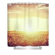 Field, Countryside At Sunset. Harvest Time. Vintage Shower Curtain
