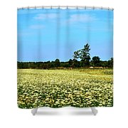 Field Of Queen Anne's Lace  Shower Curtain