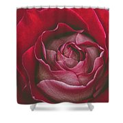 First Rose Bloom  Shower Curtain