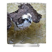 Fish Eagle Bird Playing In Water Shower Curtain