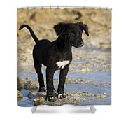 Fishing Puppy Of Polynesia Shower Curtain