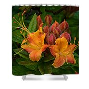 Flame Azalea Shower Curtain