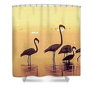 Flamingo During Sunset Shower Curtain